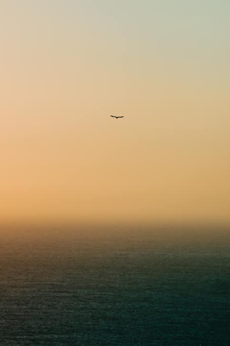 Lonebirdflying